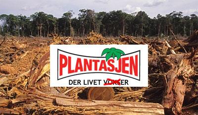 Bilde: Plantasjen og regnskogen