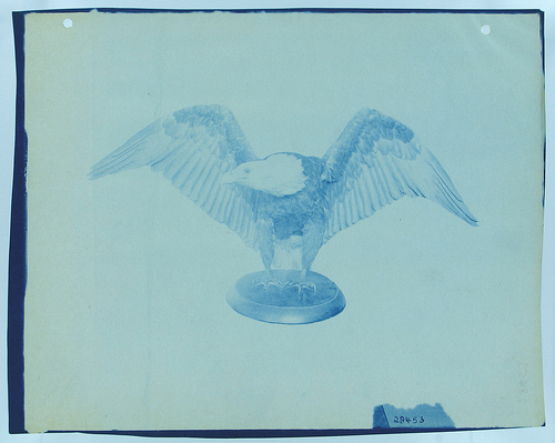A drawing of an Eagle from the Smithsonian